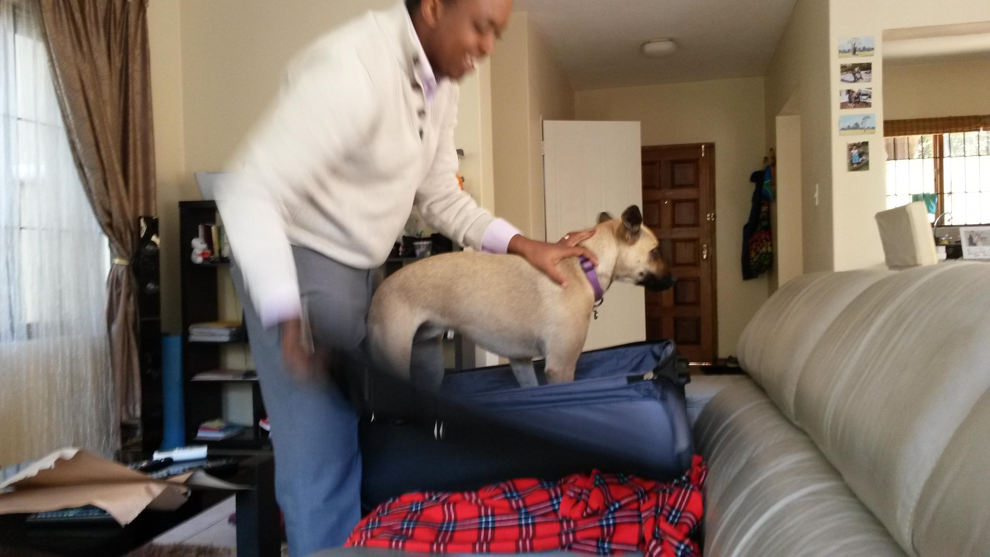 amazon comforter com supplies nylon a blue get pet guardian muzzles how gear to lined muzzle size snout dp fashion comfort dog inch